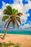 Palmier des Caraïbes photos stock