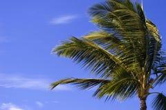 Palmier en brise tarrée Photo libre de droits