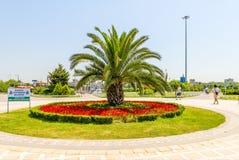Palmier en parc au milieu de la place principale d'Istanbul Photos stock