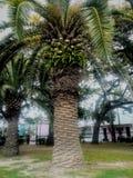 Palmier en parc de la Nouvelle-Orléans images stock