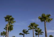Palmier en parc public Images stock