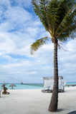Palmier et belvédère sur la plage Photo stock