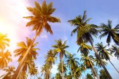 Palmier et coucher du soleil Photos stock