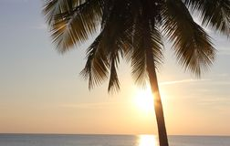 Palmier et coucher du soleil Image libre de droits