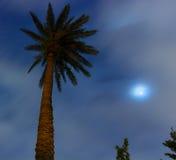 Palmier et lune au centre de Taïpeh Image libre de droits
