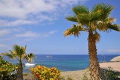 Palmier et mer chez Tenerife Photos stock