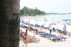 Palmier et plage Photographie stock libre de droits