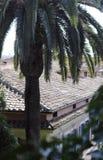 Palmier et toit carrelé images stock