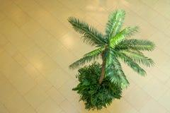 Palmier exotique photo libre de droits