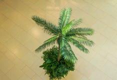 Palmier exotique images libres de droits