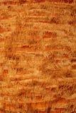 Palmier, fin sur l'écorce de paume, verticale Image libre de droits