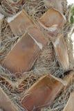 Palmier, fin sur un tronc de paume, fond tropical texturisé, vertical Photographie stock