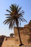 Palmier isolé Photos libres de droits