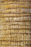 Palmier - le cortex Photographie stock libre de droits