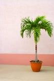 Palmier mis en pot Photo stock