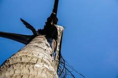 palmier mort Photos libres de droits