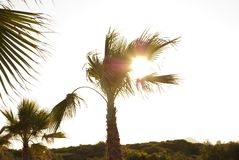 Palmier, panorama avec des palmiers contre le soleil et fusée Image stock