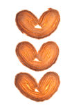 Palmier Stock Image