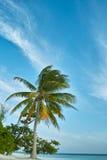 Palmier, plage blanche de sable, océan et ciel bleu Photo libre de droits