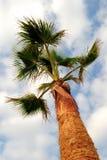Palmier pris de dessous avec le ciel bleu et les nuages blancs, concept pour l'été, vacances, tropical, verticales Photographie stock
