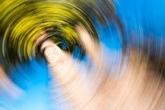 Palmier radial de tache floue Photos libres de droits