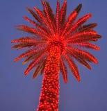 Palmier rouge de Noël Image stock