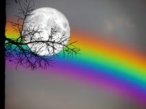 palmier sec de silhouette arrière de pleine lune et d'arc-en-ciel en ciel nocturne Image stock