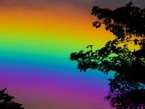 palmier sec de silhouette de dos de ciel d'arc-en-ciel Photographie stock
