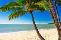 Palmier simple à la plage de crique de paume, Queensland du nord, Australie Image stock