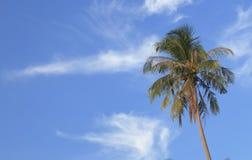Palmier simple Photo libre de droits