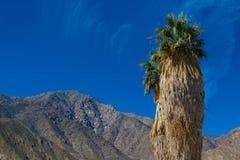 Palmier solitaire dans le désert Photographie stock libre de droits