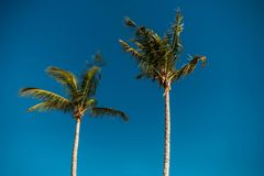 Palmier sous le ciel bleu photographie stock