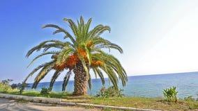 Palmier sur l'horizon bleu lumineux d'océan banque de vidéos