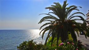 Palmier sur l'horizon bleu lumineux d'océan clips vidéos