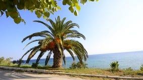 Palmier sur l'horizon bleu lumineux d'océan et le ciel clair banque de vidéos