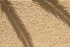 Palmier sur l'ombre sur le mur Photos stock