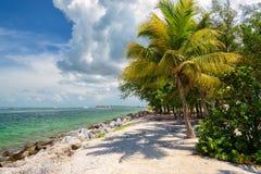 Palmier sur la mer des Caraïbes, la Floride Photos stock