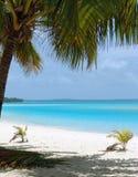 Palmier sur la plage Photographie stock
