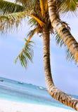 Palmier sur la plage photos stock