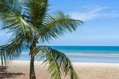 Palmier sur la plage Image stock