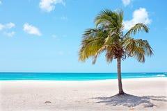 Palmier sur la plage au Palm Beach sur l'île d'Aruba dans le Cari Images libres de droits
