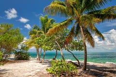 Palmier sur la plage florida photos libres de droits