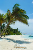 Palmier sur la plage par l'eau Photo libre de droits