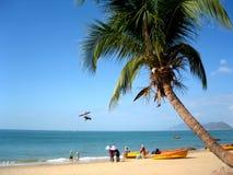 Palmier sur la plage tropicale Photo stock
