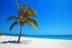 Palmier sur la plage tropicale Vue de nature Voyage Images stock