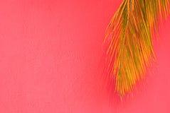 Palmier sur le fond tropical rose Photographie stock libre de droits