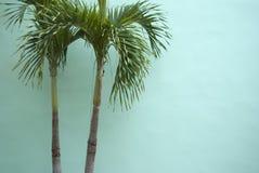Palmier sur le mur bleu vert Image stock