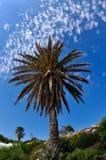 Palmier sur un fond des nuages Photo stock