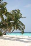 Palmier sur une côte d'océan Images libres de droits