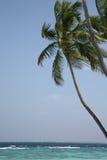 Palmier sur une côte d'océan Image stock